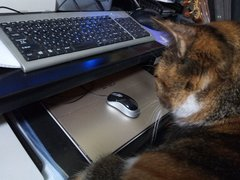 sara_mouse-01.jpg
