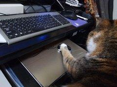 sara_mouse-03.jpg